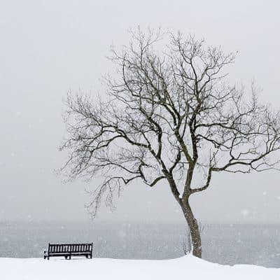 Dalgety Bay Winter Tree